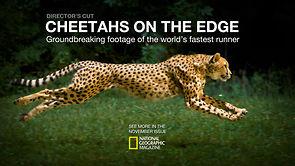 Cheetahs on the Edge–Director's Cut