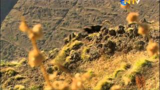 NTV Belgesel-Yükseklerde Yaşam Bölüm 1
