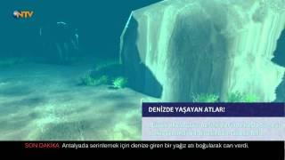 Denizde yaşayan atlar – NTV Belgeseli