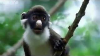 BBC – Konuşan Hayvanlar :)